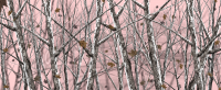 Snowstorm Camo Pink