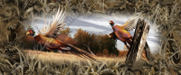 Ringneck Pheasant Compact Size Tailgate
