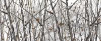 Bushwolf Snowstorm Camo