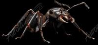 Black Ant 4