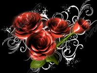 Shine Roses