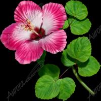 Hibsicus Pink