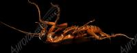 Cockroach 4