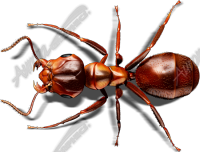 Red Ant 2