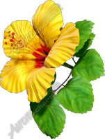 Hibiscus Yellow & Red