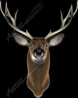 Buck Front
