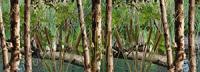 Wetland Camo 2