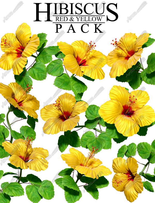 Hibiscus Yellow & Red Pack