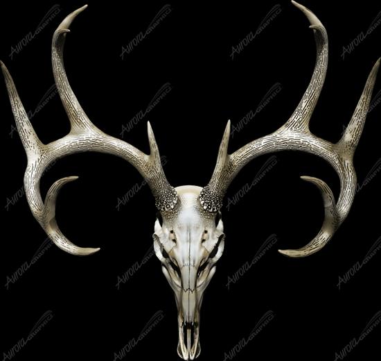 Buck Skull 2