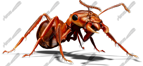 Red Ant 4