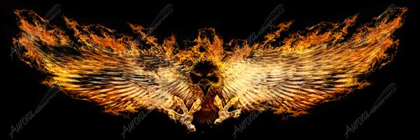 Burning Phoenix 1