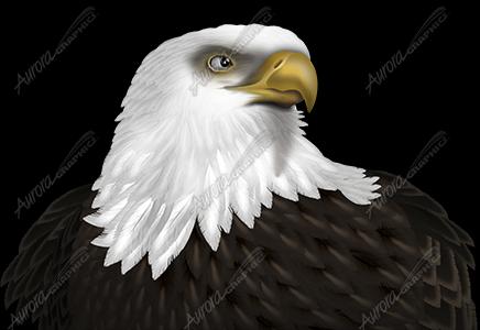 Eagle Headshot