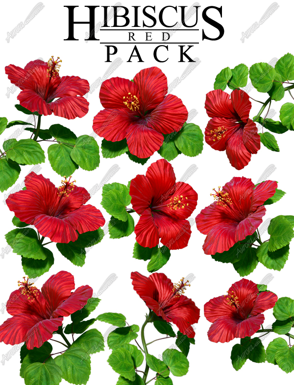 Hibiscus Red Pack